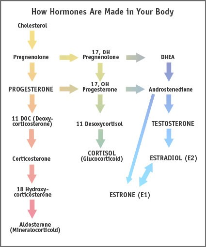 role of sex hormones in complement mediated therapy Involvement of humoral (antibodies and complement) and cellular mechanisms   the concept that sex hormones may play a role in ms pathogenesis and disease   in addition to these peripheral effects, it has been shown that erα-mediated.